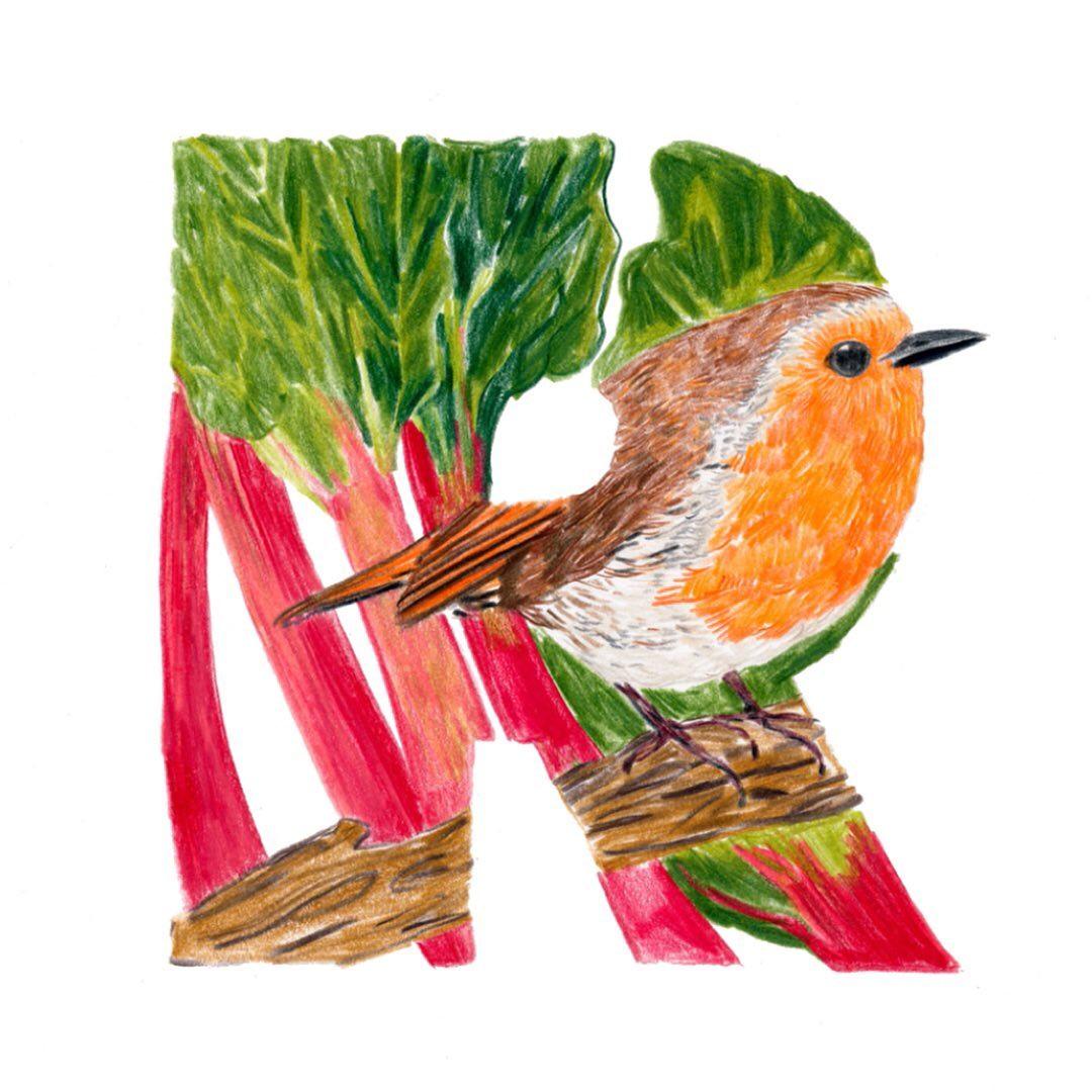 Robin redbreast and Rhubarb