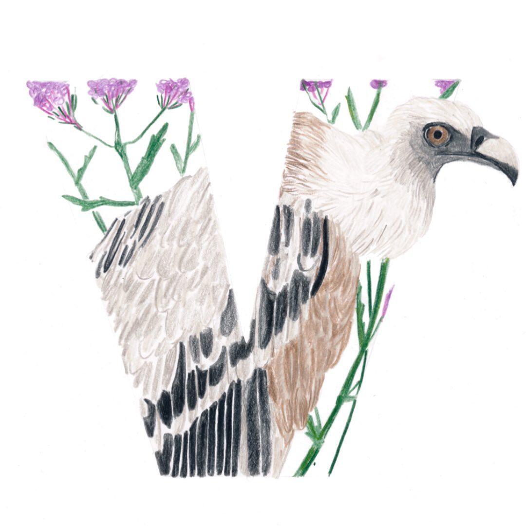 Vulture and Verbena