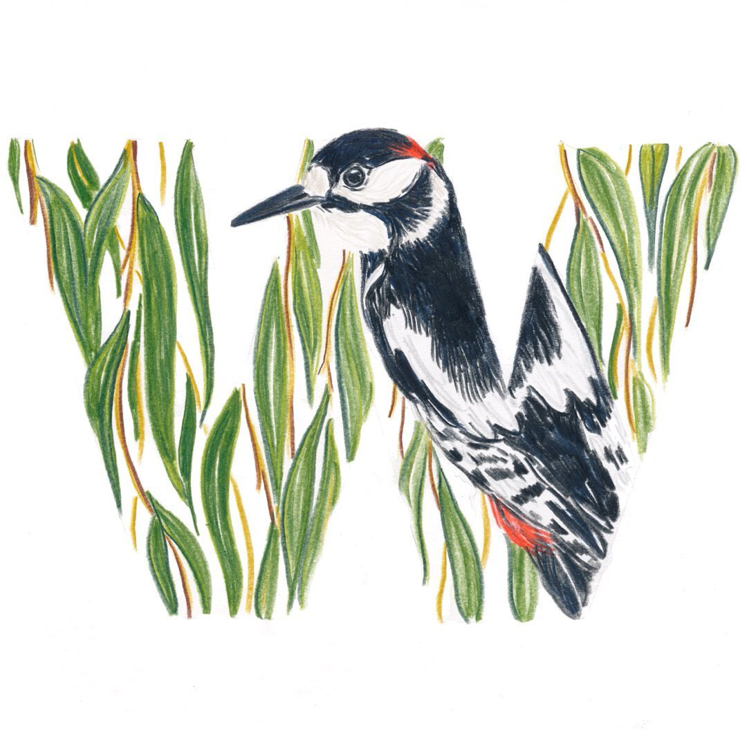Woodpecker and Willow