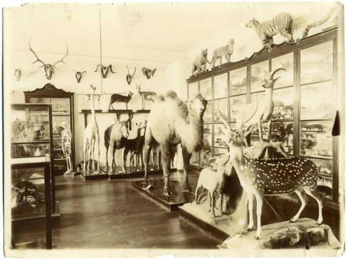 Зоологический музей Императорского Казанского университета 1896