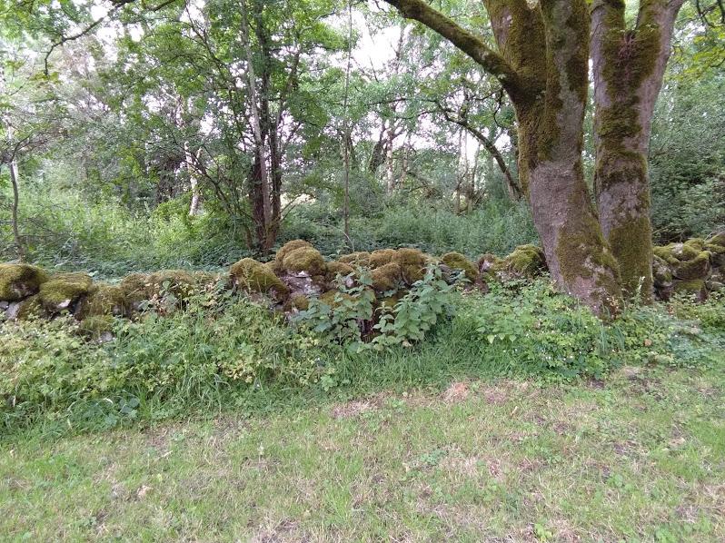 Очень старая изгородь. Такие камни, для меня, составляют важную часть духа Ирландии. Глядя на них, вспоминаются персонажи ирландских мифов, всякие леприконы, тролли и прочие.