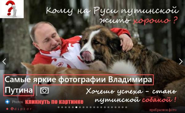 В.Путин и собаки