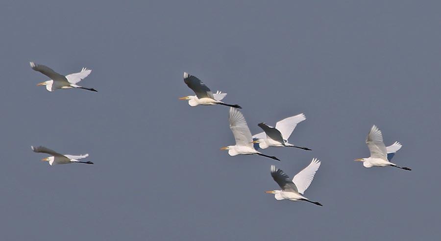 Heron3