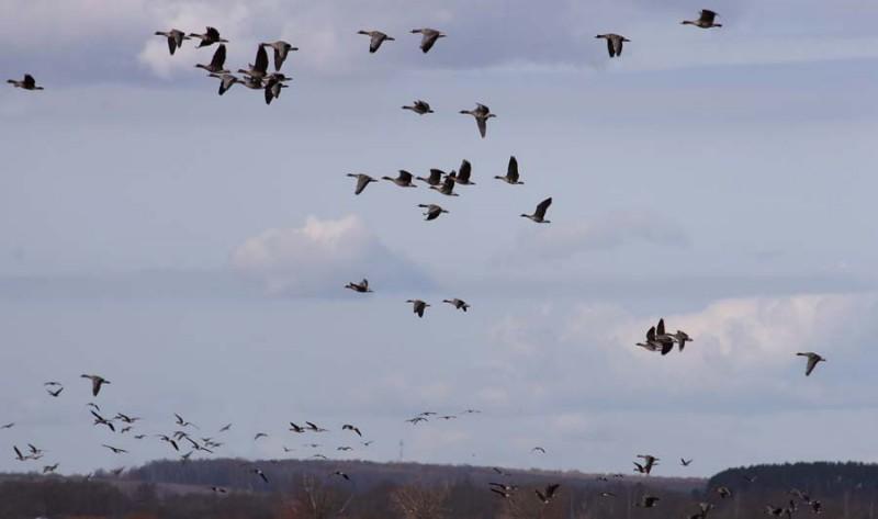 Flock2_s