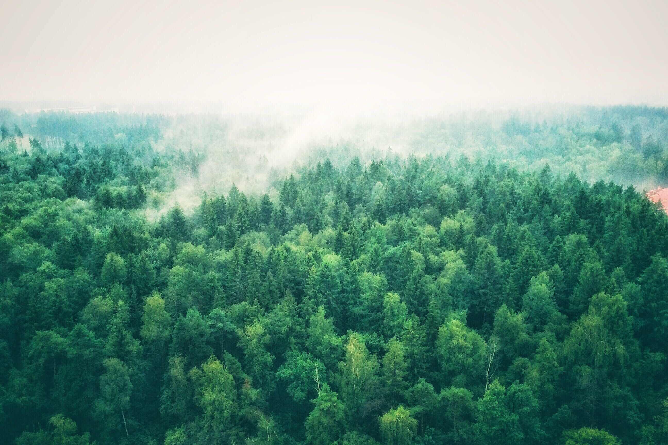 Лес шумит картинки