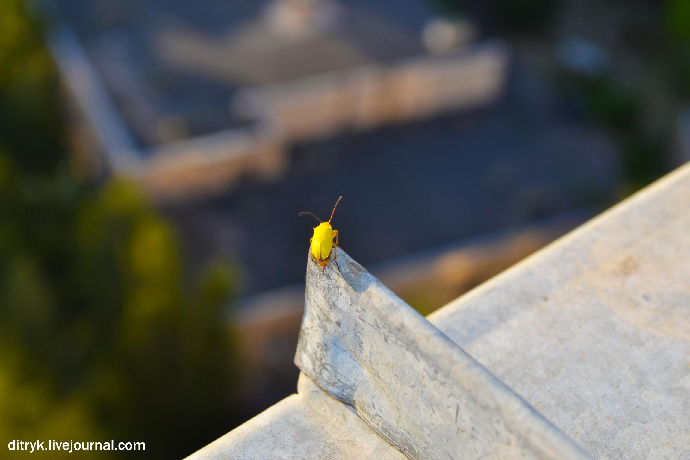 жучара на крыше