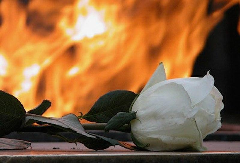 Роза в огне.jpg