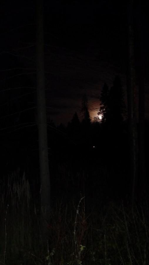 Луна в лесу