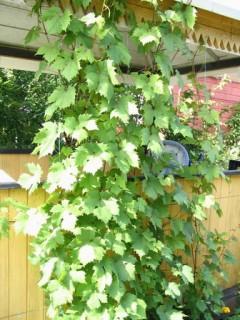Каталог растений сайта Gardenia.ru