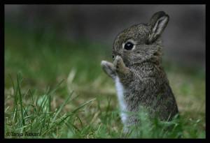 cute-bunny-2245r60