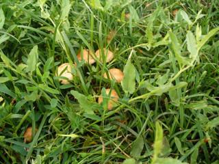 грибы после дождя