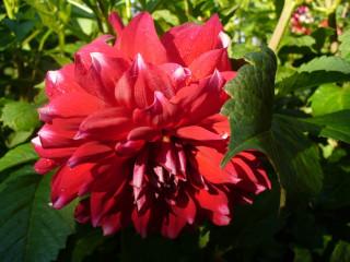 просто красивый цветок