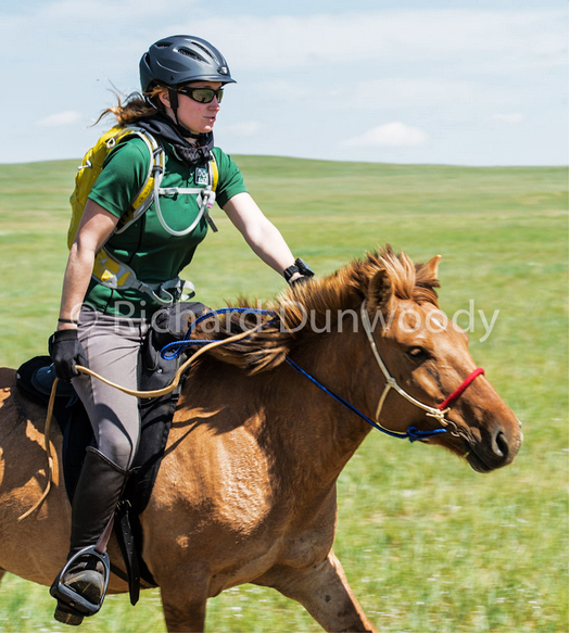 Galloping in the Mongol Derby