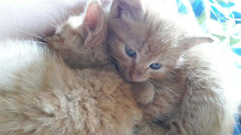 Для котят - ROYAL CANIN (Роял Канин, Россия) - Интернет