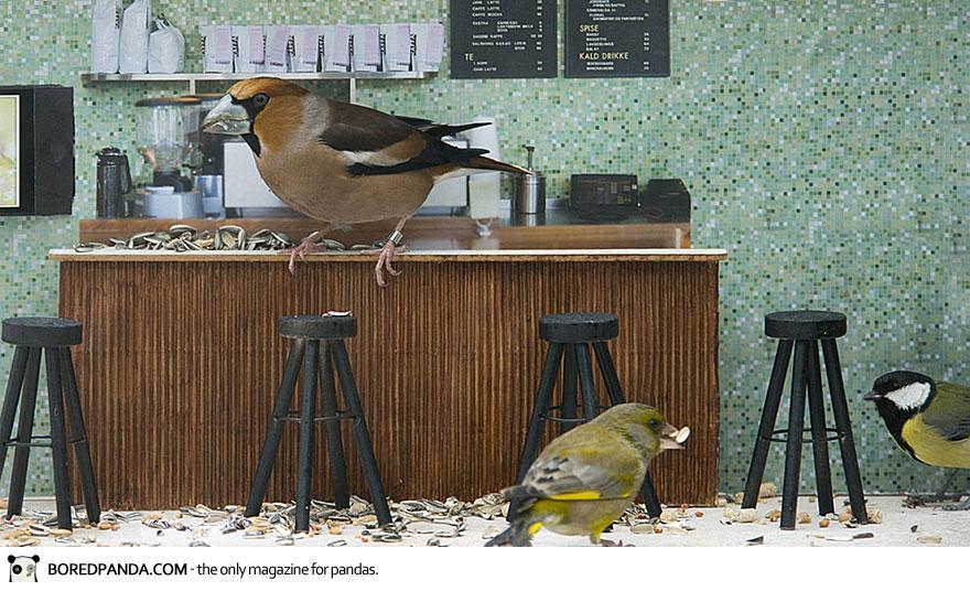 piip-show-bird-feeder-coffee-bar-magne-klann-1__880
