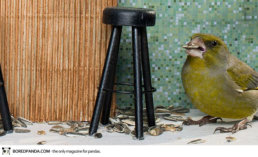 piip-show-bird-feeder-coffee-bar-magne-klann-6__880