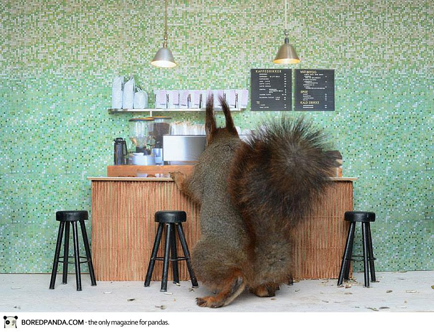piip-show-bird-feeder-coffee-bar-magne-klann-9__880