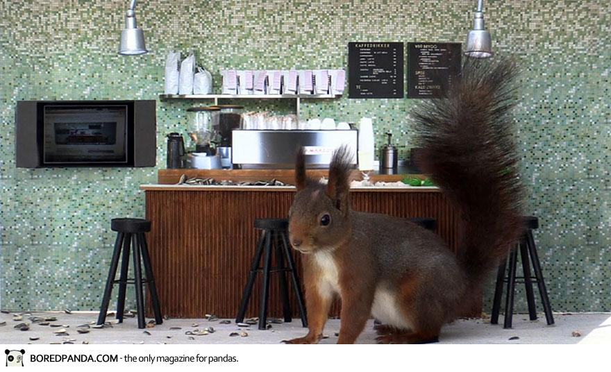 piip-show-bird-feeder-coffee-bar-magne-klann-2__880