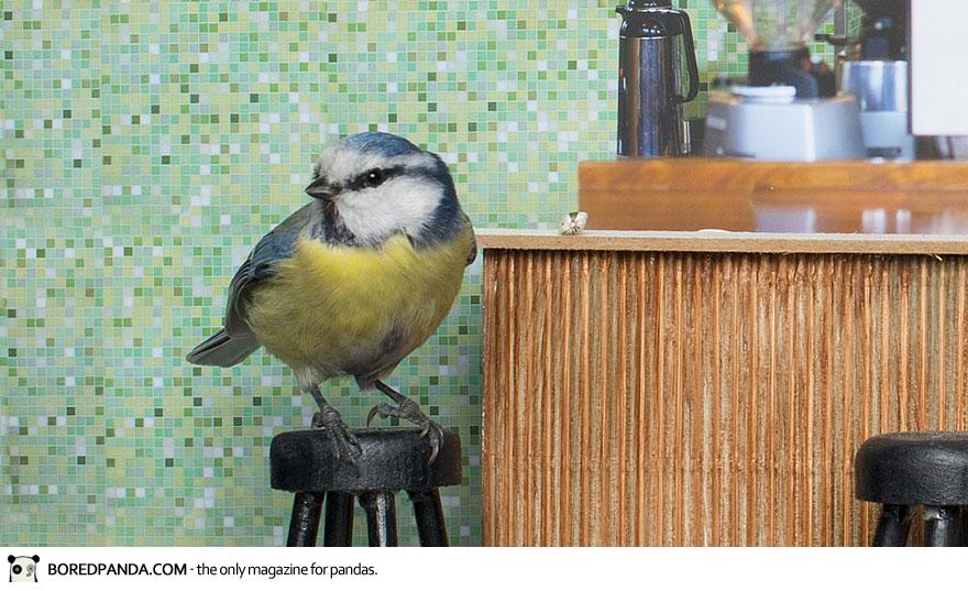piip-show-bird-feeder-coffee-bar-magne-klann-5__880