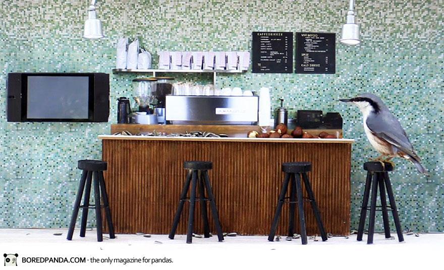 piip-show-bird-feeder-coffee-bar-magne-klann-3__880