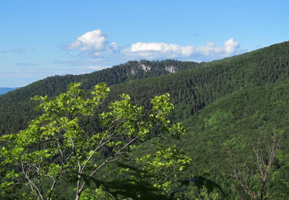 А вторую остановку мы нашли уже примерно в километре от т/с Кош: от основной дороги ответвлялась тропка на лесной уступ, с которого можно было полюбоваться на Биюк-Таушан (на этом фото) и отроги Оксек-Буруна.