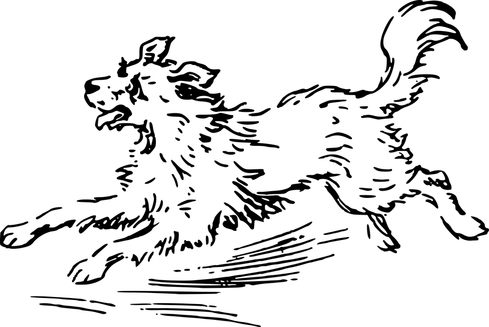 Восточный Гороскоп. СОБАКА-2021