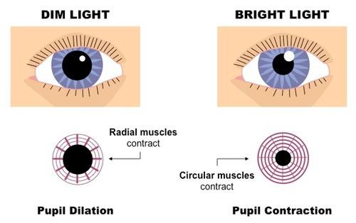 pupil_reflex_med