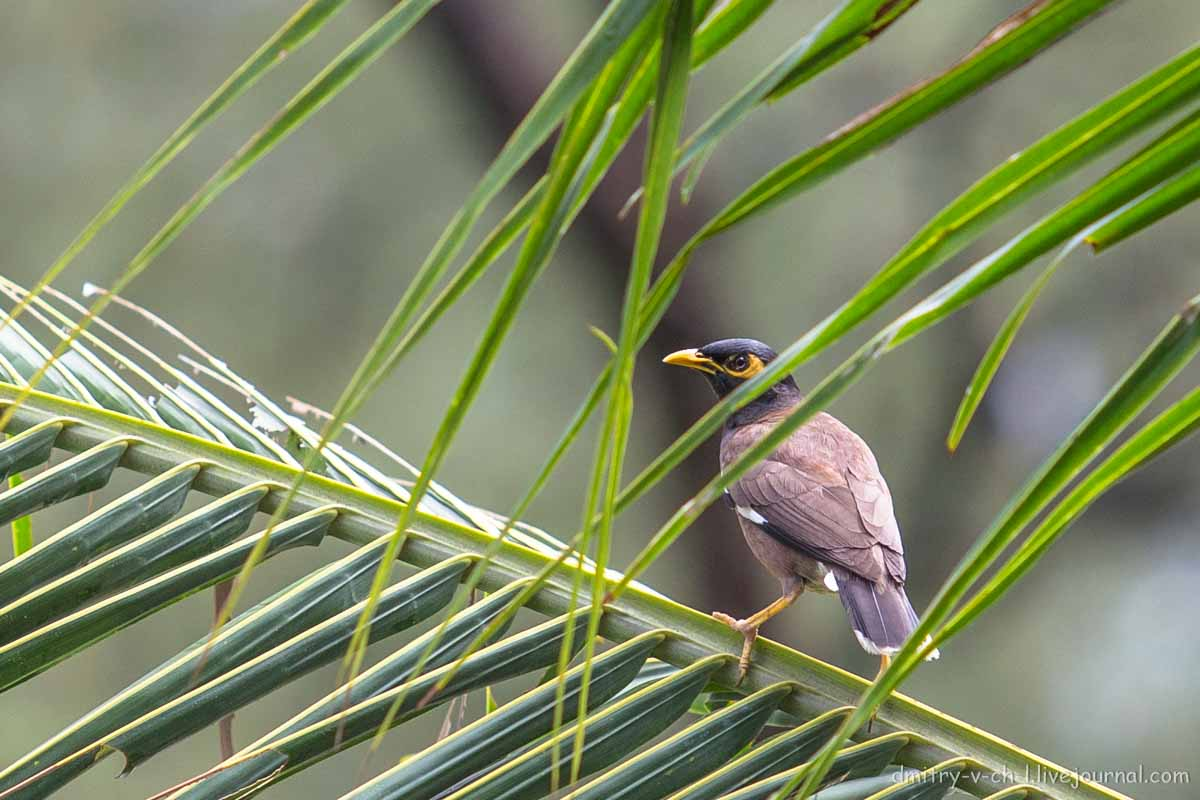 центре фото птицы тайланда фото с названиями очищает организм