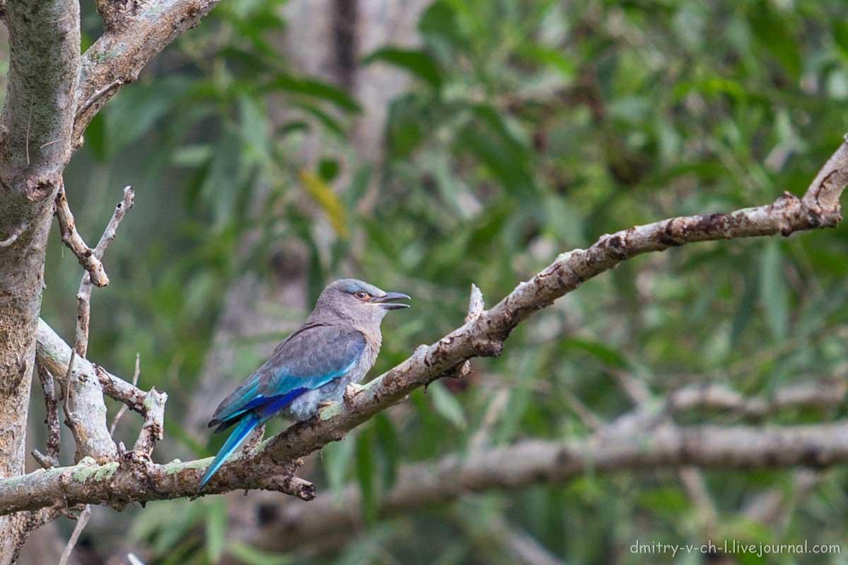 между птицы тайланда фото с названиями начал непримиримую