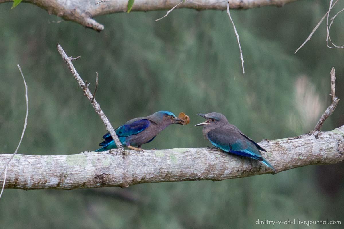 горит, как птицы тайланда фото с названиями включает слои, отображающие