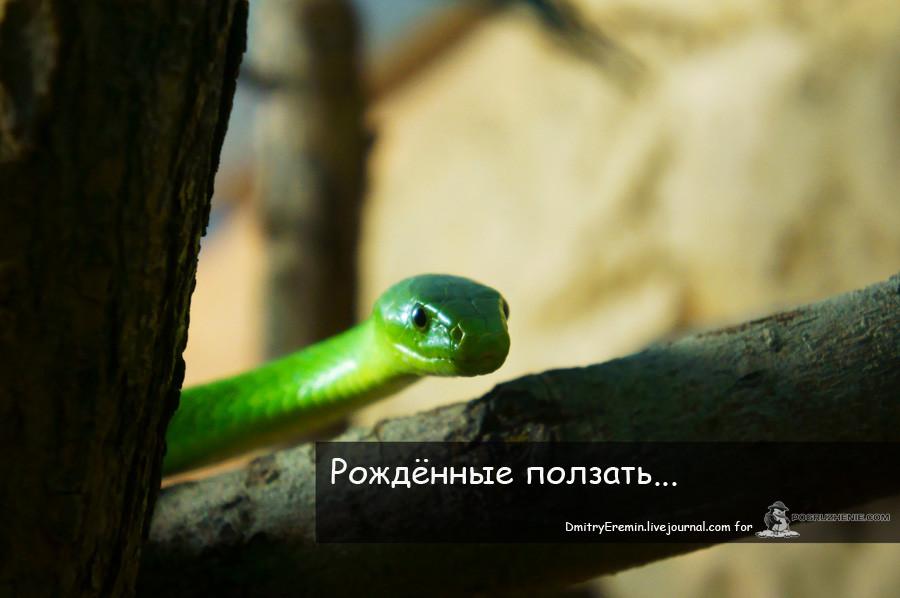 Terrarium_titul_web