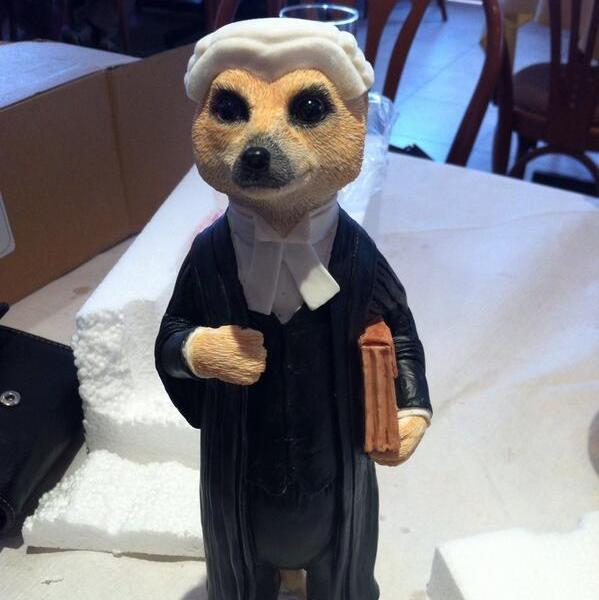 lawyer-meerkat1