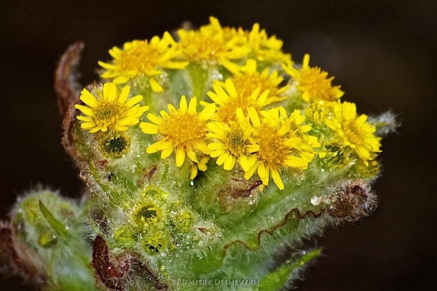 цветочек красивый-красивый