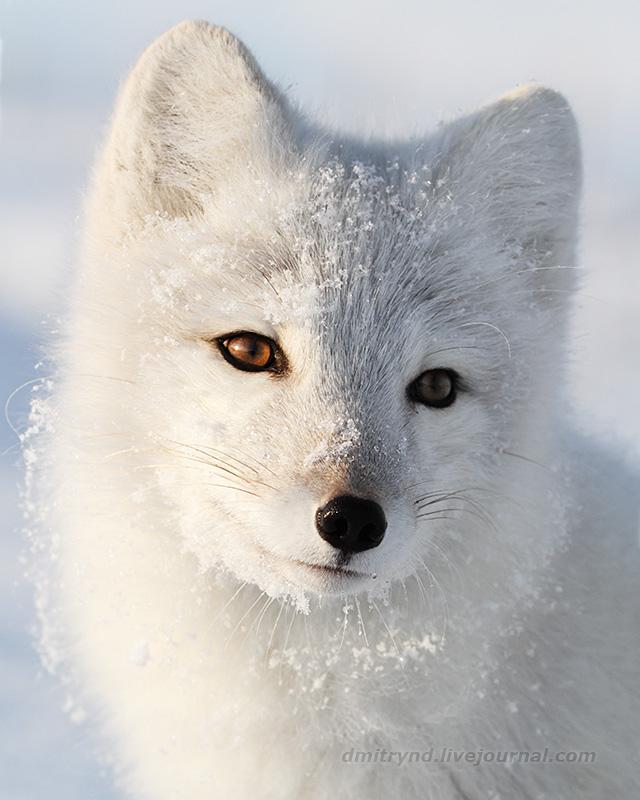 P_Fox_9708