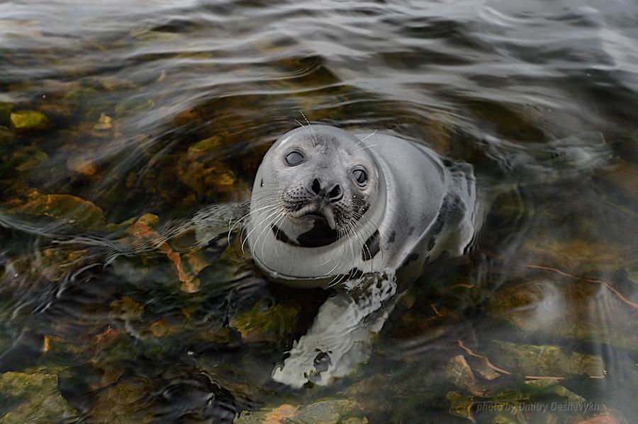 Seal_8889.jpg