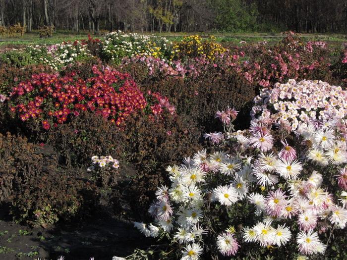 Кривий Ріг : ботанічний сад