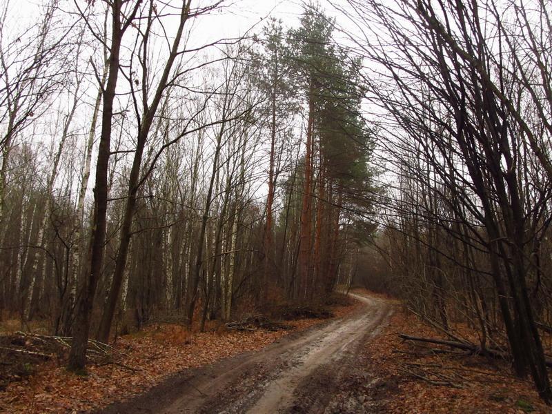 Ліс біля Мошен