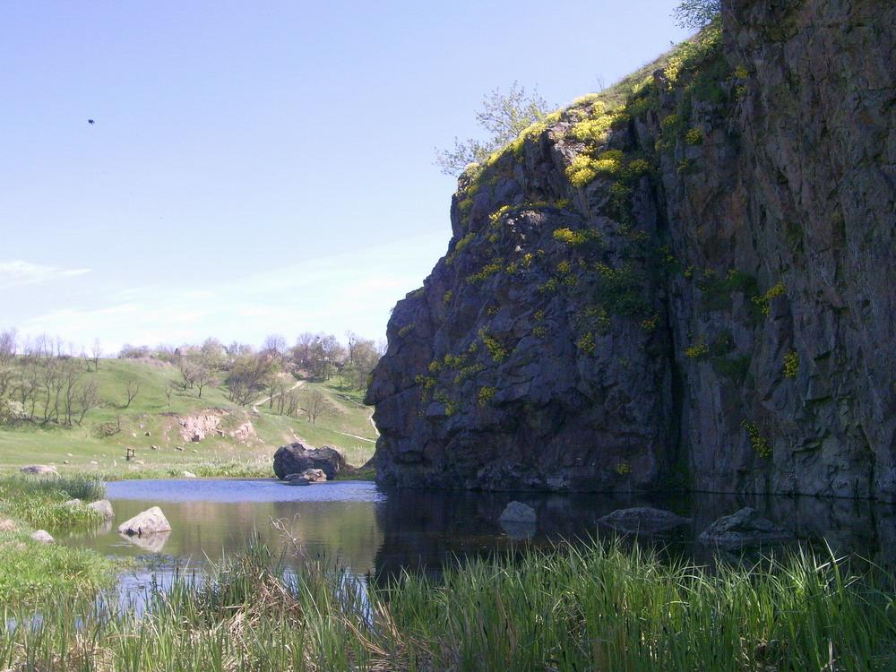 Авринія скельна