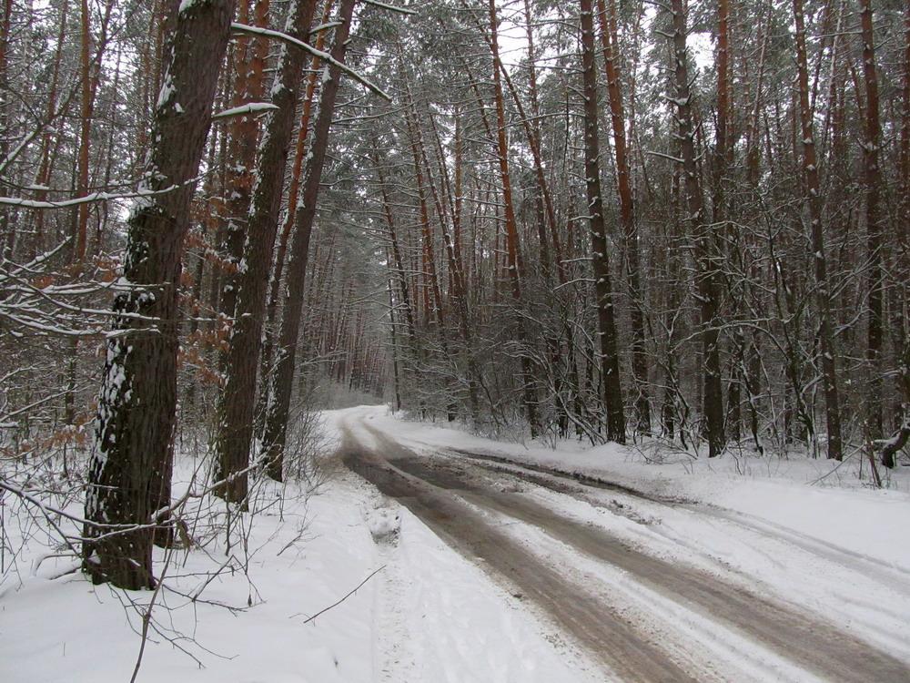 Зимово - весняний ліс