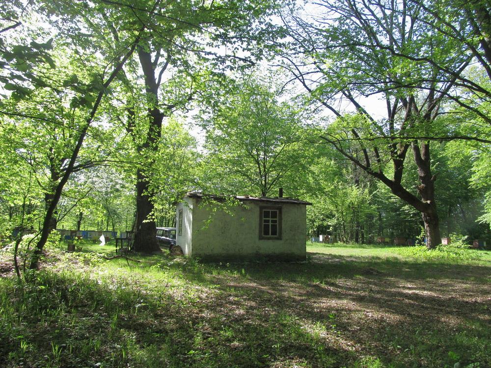 Ліс біля Білозір'я