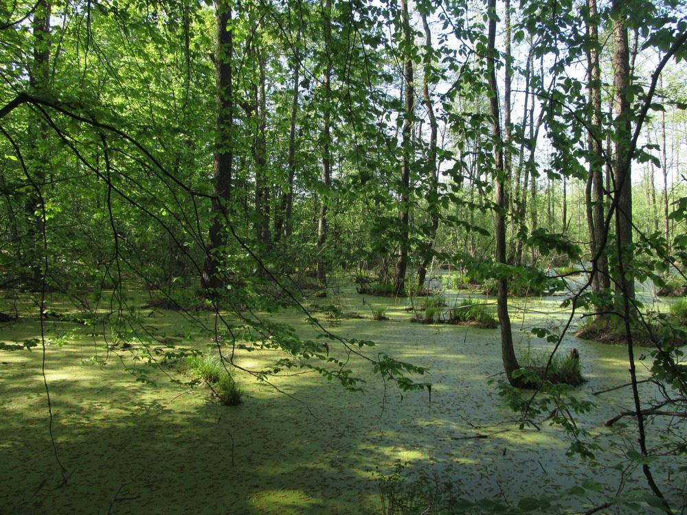 Весна на Ірдинському болоті