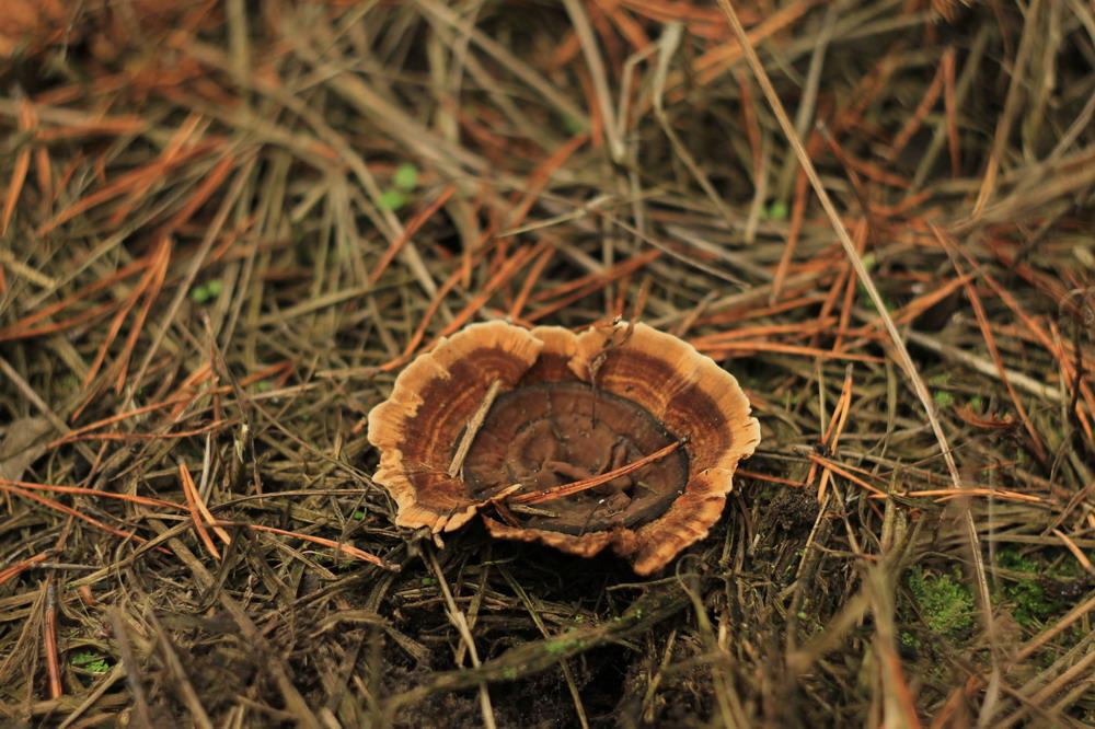 Невідомий гриб