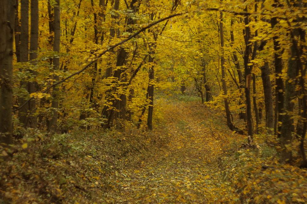 Осінній ліс біля Сміли