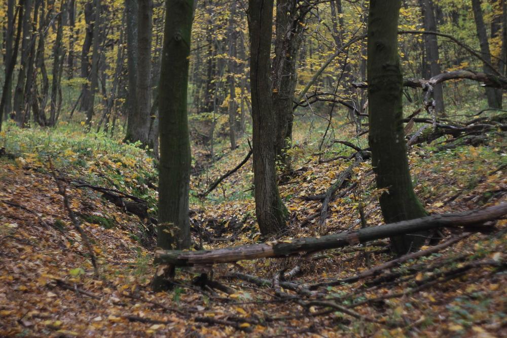 Ліс біля Сміли