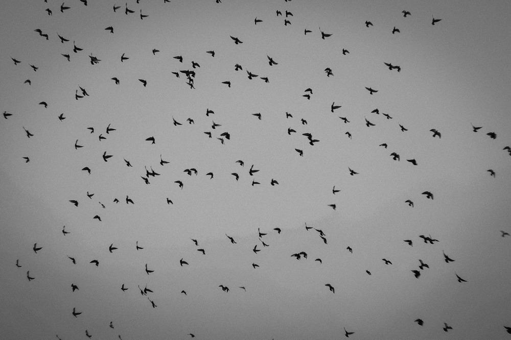 Птахи депресія