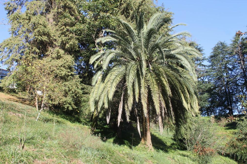 Ботанічний сад в Батумі