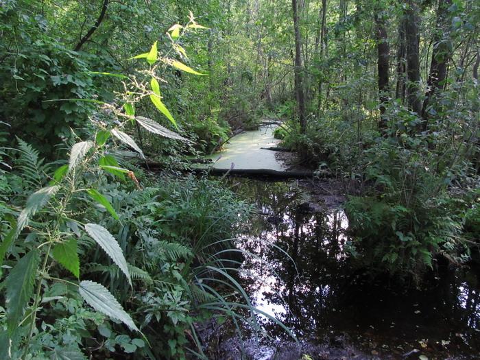 Ірдисньке болото