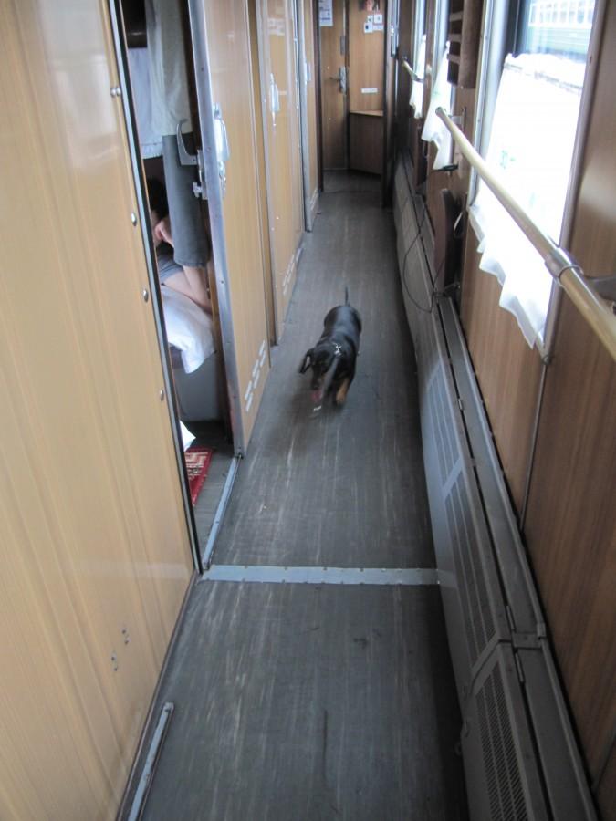 Элис поезд (6)