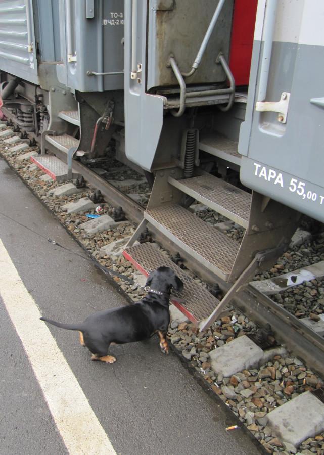 Элис поезд (5)