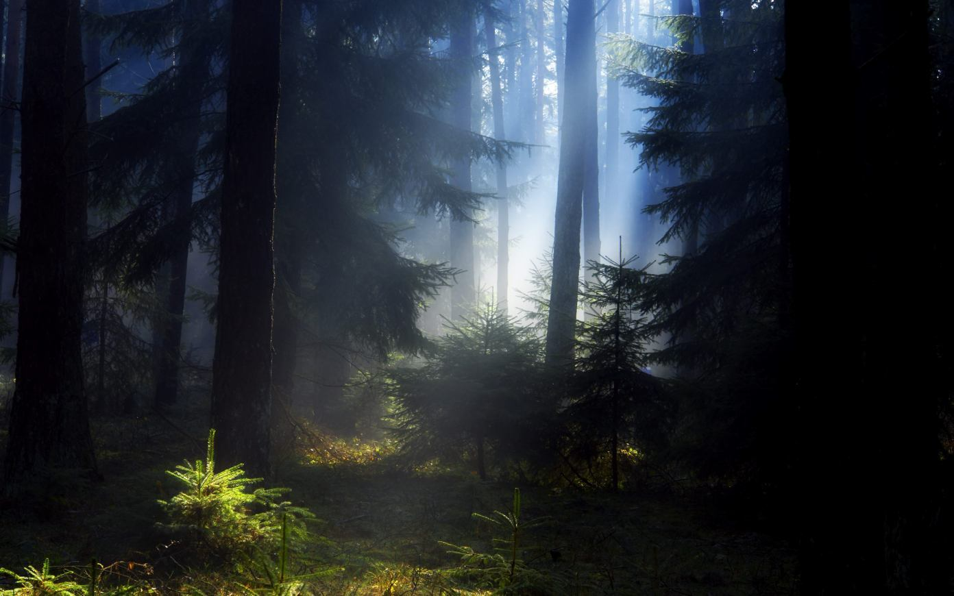 Earth_forest_110225